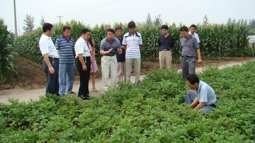 市农业农村局组织蔬菜新技术观摩